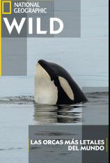Las orcas más letales del mundo