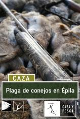 Plaga de conejos en Épila