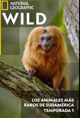 Los animales más raros de Sudamérica