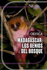 Madagascar: los genios del bosque