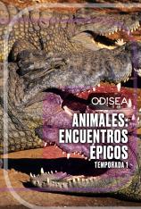 Animales: encuentros épicos