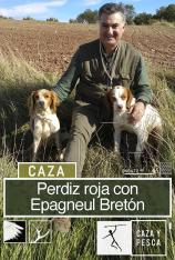 Perdiz roja con Epagneul  Bretón