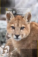 Los pumas de la Patagonia: Nacimiento