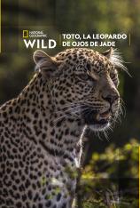 Toto, la leopardo de ojos jade