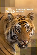 La reina tigresa de Taru