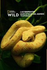 Las serpientes más letales del mundo