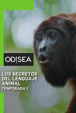 Los secretos del lenguaje animal