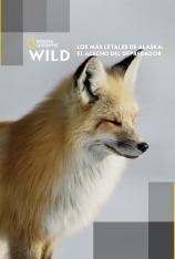 Los más letales de Alaska: el acecho del depredador