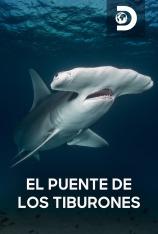 El puente de los tiburones