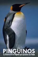 Pingüinos, la historia de las aves que quisieron ser peces