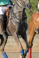 Polo Rider Cup Best Moments (T2021)