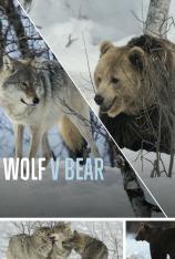 El lobo frente al oso