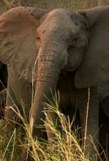 La guerra de los elefantes