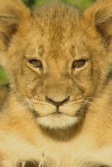 Cecil: el legado de un rey
