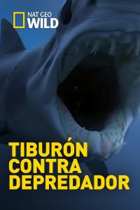 Tiburón contra depredador