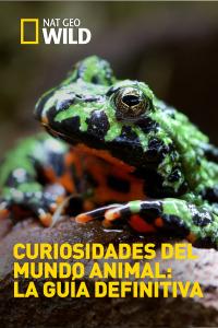 Curiosidades del mundo animal: la guía definitiva. T1.  Episodio 3: Leones y mantis marinas