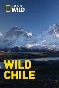 Wild Chile. T1. Wild Chile