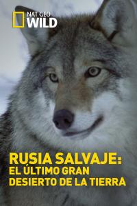 Rusia salvaje: El último gran desierto de la Tierra. T2. Rusia salvaje: El último gran desierto de la Tierra