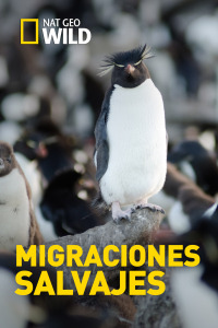 Migraciones salvajes. T1. Migraciones salvajes
