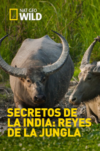Secretos de la India: Reyes de la jungla