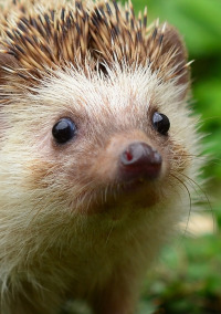 Animales Bebé del Mundo. T1.  Episodio 4: Reino Unido