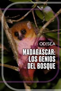 Madagascar: los genios del bosque. T1. Madagascar: los genios del bosque