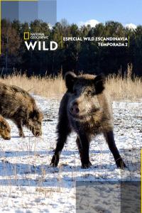 Especial Wild Escandinavia. T2. Especial Wild Escandinavia