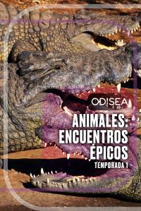 Animales: encuentros épicos. T1. Animales: encuentros épicos