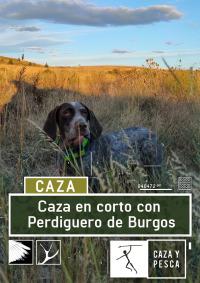 Caza en corto con Perdiguero de Burgos