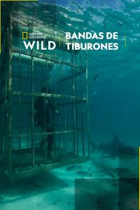 Bandas de tiburones