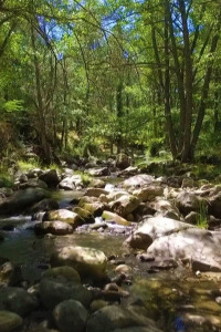 Parques naturales. T1. Parques naturales