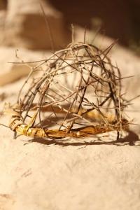 Expedientes misterio de la Antigüedad. T2.  Episodio 9: Los secretos de la crucifixión