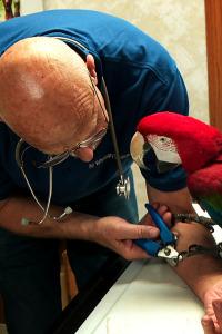 El increíble doctor Pol. T7.  Episodio 15: Tres veterinarios y un bebé
