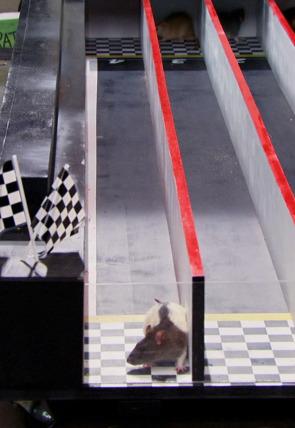 Ep.14 La increíble carrera ratonil