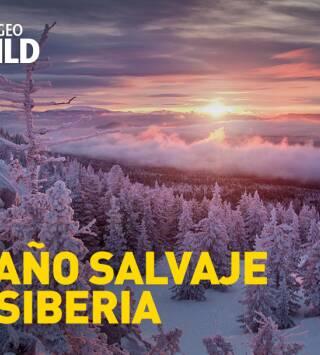 El año salvaje de Siberia
