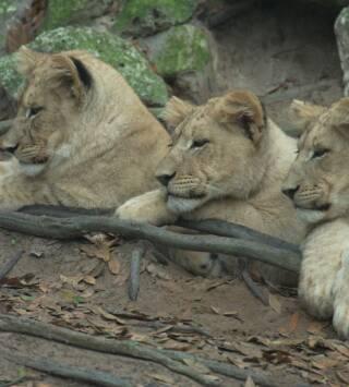 Episodio 1: Perros salvajes de África