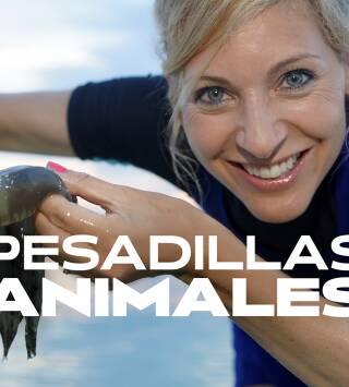 Pesadillas animales