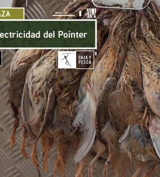 La electricidad del Pointer