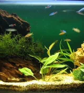 Episodio 4: El acuario increíble de Kevin Smith
