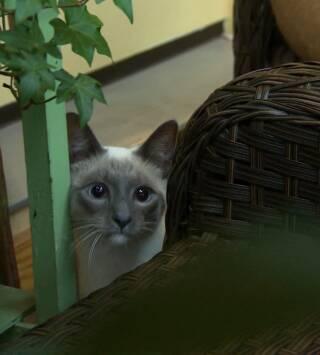 Episodio 7: El ladrón de gatos