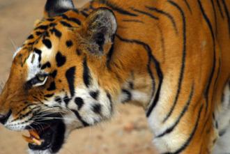 Los animales más peligrosos del mundo