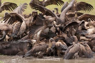 Los depredadores más letales de África