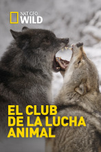 El club de la lucha animal