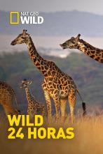 Wild 24 horas - Batallas en las Montañas Rocosas