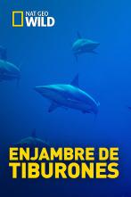 Enjambre de tiburones