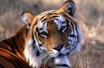 Curiosidades del mundo animal: la guía definitiva