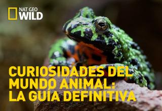 Curiosidades del mundo animal: la guía definitiva - Leones y mantis marinas