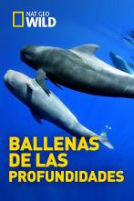 Ballenas de las profundidades