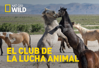 El club de la lucha animal - Asesinos gigantes