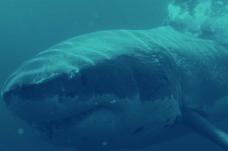 Patrulla tiburón